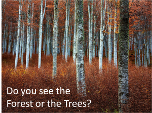 Do You See the Forest or the Trees?